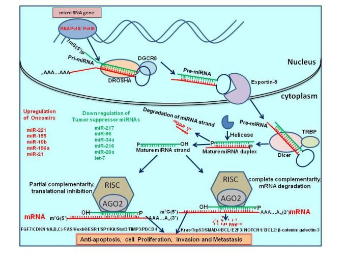 Biosynthesis of miRNAs and their role in Pancreatic cancer