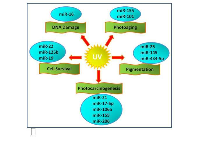 Selected miRNAs  in UV-induced skin response