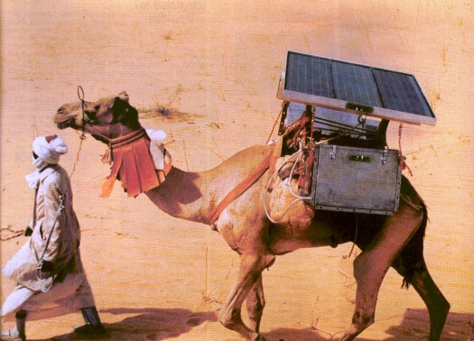 camel-vaccine-transport