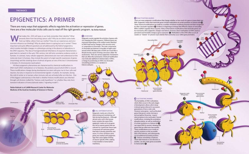 epigenetics_primer.jpg